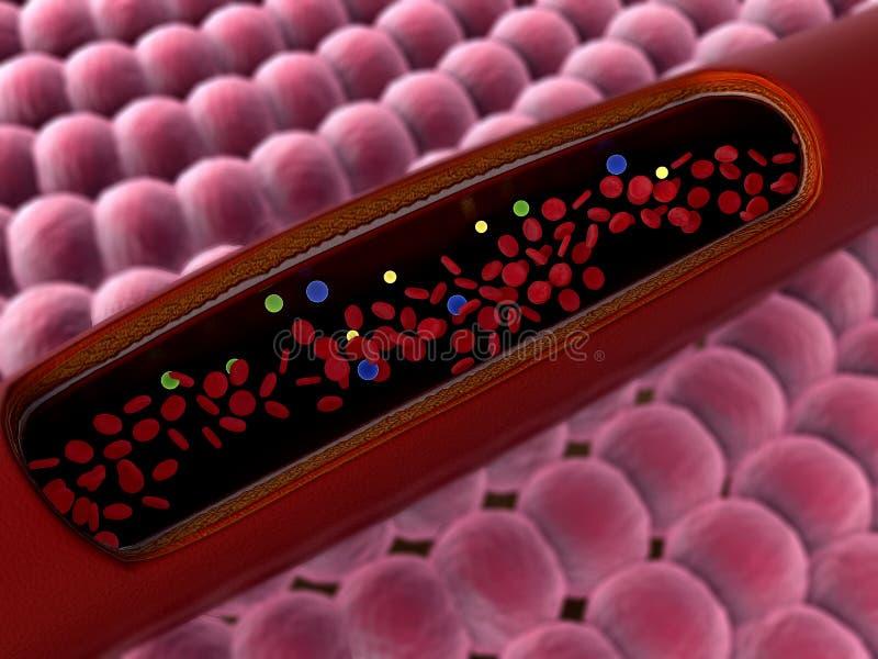 Erytrocyt we krwi ilustracji