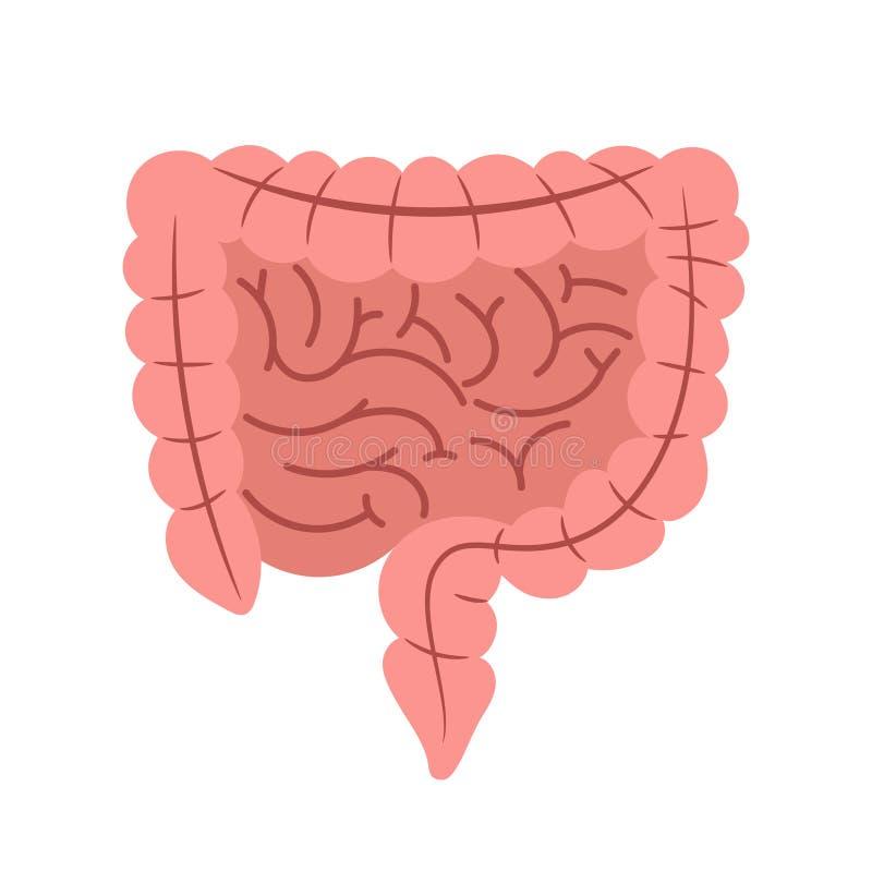 Esófago del intestino aislado en el vector blanco del fondo libre illustration