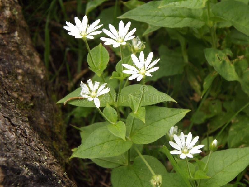 Es gibt Blumenwachsen am Hanf in einer Waldreinigung lizenzfreies stockbild