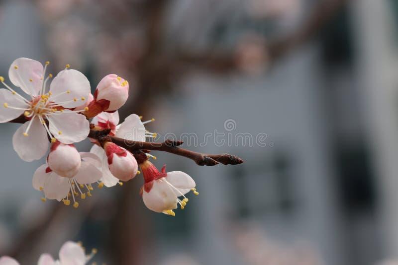 Es gibt einige von Blumen lizenzfreies stockbild