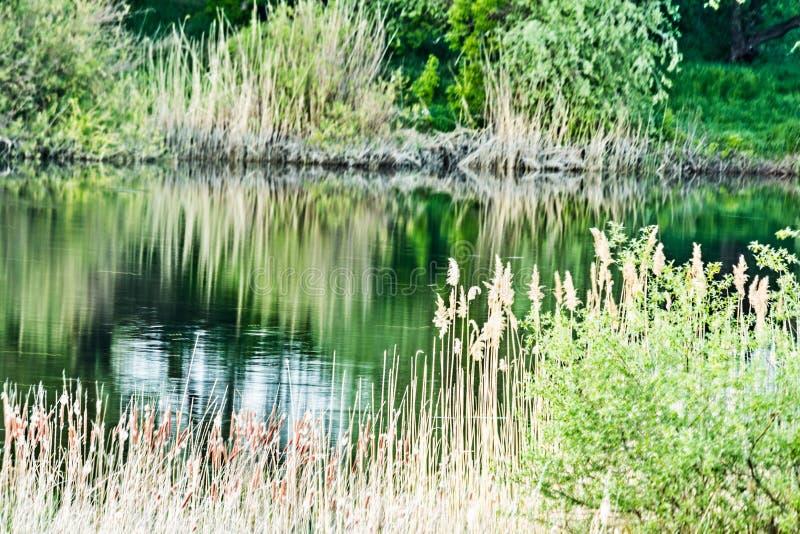 Es hat eine Ansicht des südlichen Wanzen-Flusses lizenzfreies stockfoto
