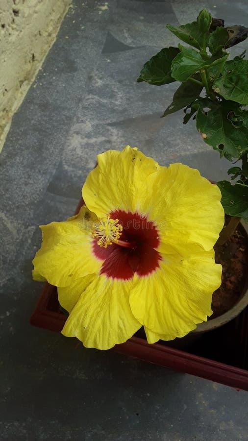 Es ist eine Superblume lizenzfreies stockbild