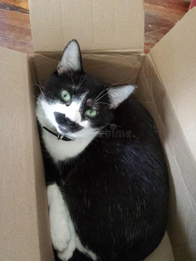 ¡Es mi caja! fotos de archivo libres de regalías