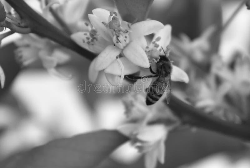 Esa abeja con clase del vintage fotografía de archivo libre de regalías