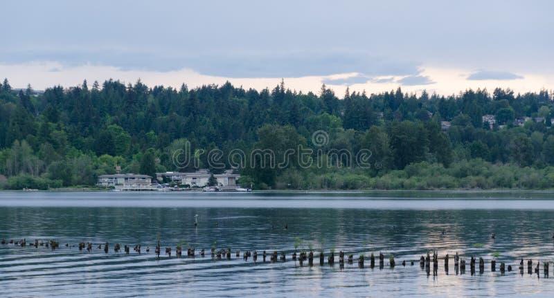 Esaminando area di Redmond Idylwood Park da atterraggio di Sammamish attraverso il lago immagine stock libera da diritti