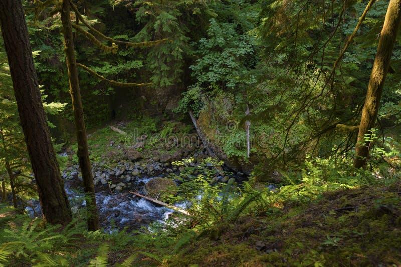 Esaminando giù dalla traccia Tanner Creek nella gola del fiume Columbia immagini stock