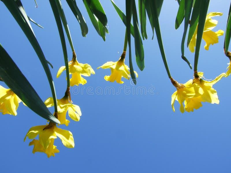 Esamini il cielo attraverso i fiori immagini stock libere da diritti