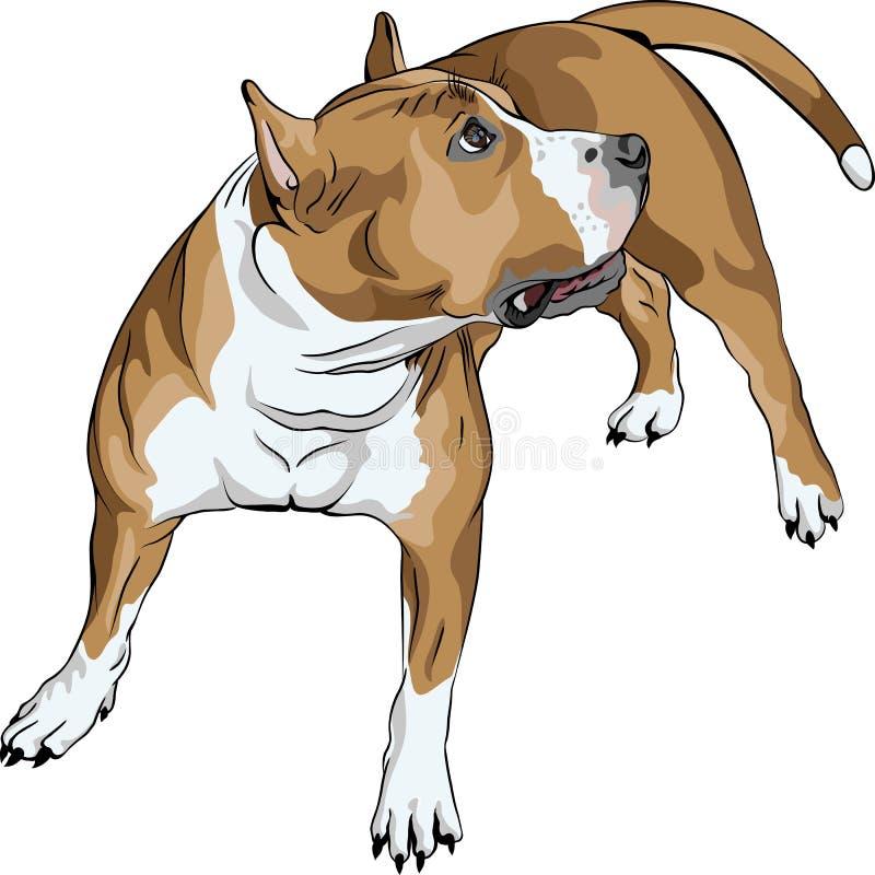 Esboç o terrier de Staffordshire americano do cão ilustração royalty free