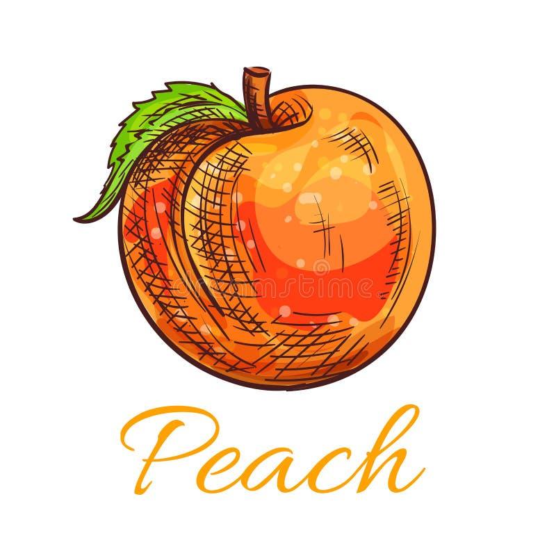 Esboço alaranjado fresco do fruto do pêssego para o projeto do alimento ilustração do vetor
