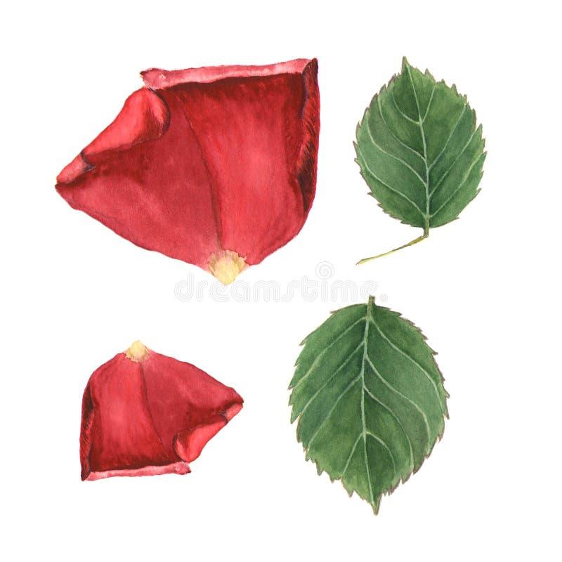 Esboço botânico da ilustração da aquarela da pétala cor-de-rosa e da folha no fundo branco ilustração royalty free