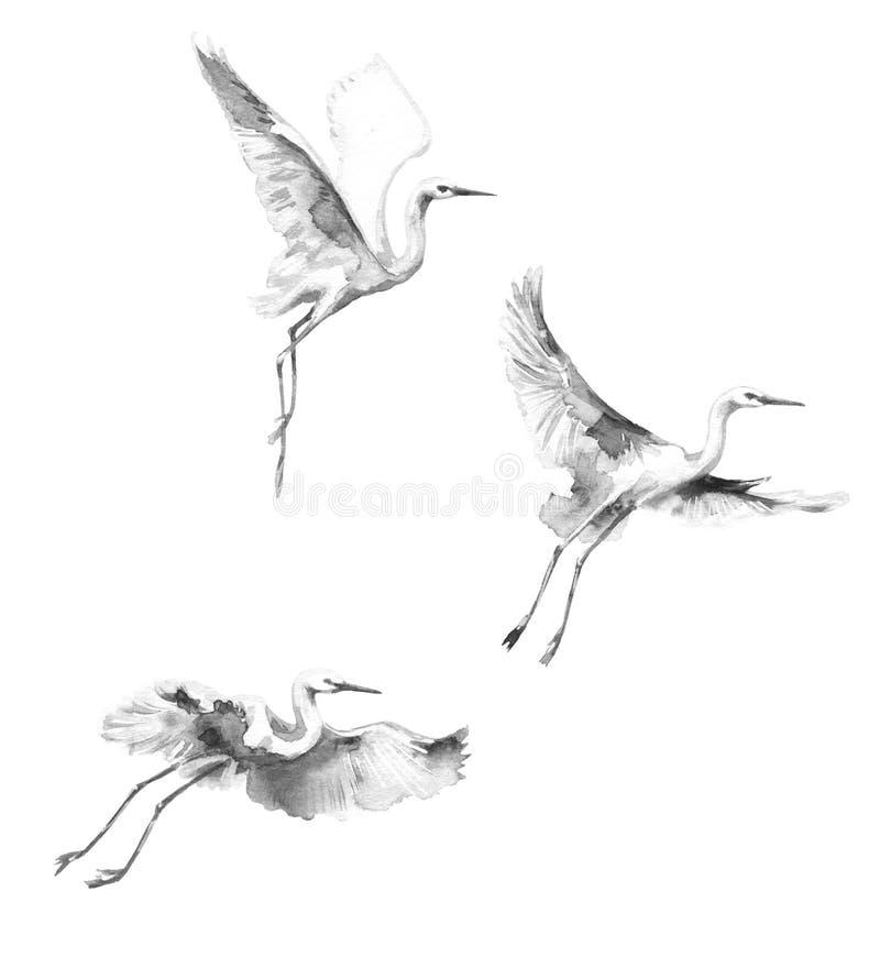 Esboço branco da aquarela das cegonhas do voo ilustração royalty free