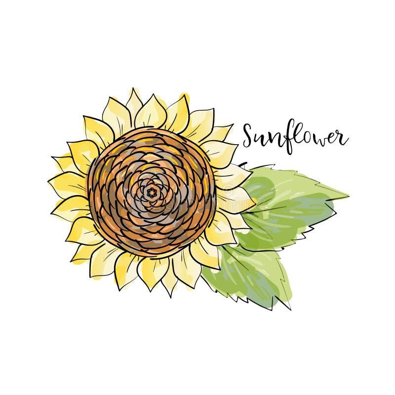 Esboço colorido do verão, estilo copic do marcador da aquarela Girassol brilhante e borrado com folhas Rotulando o girassol da in ilustração do vetor