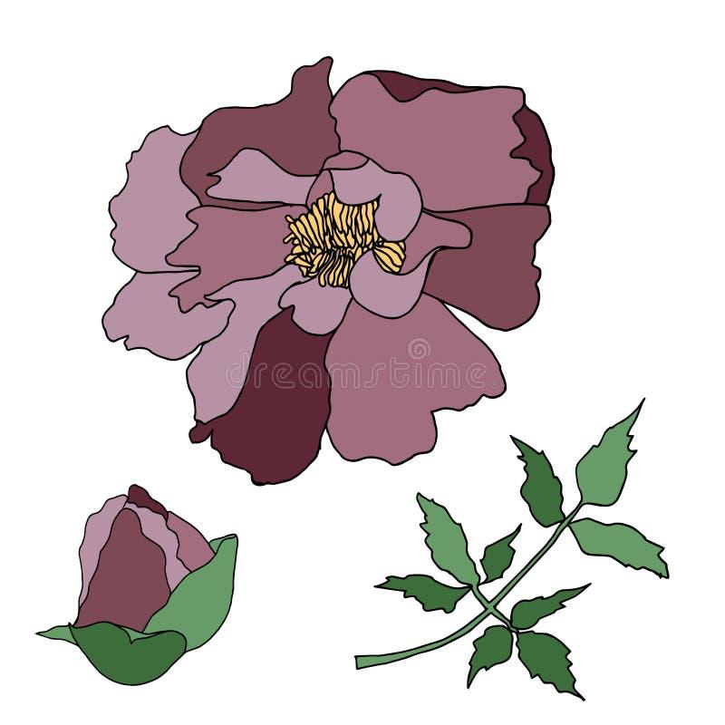 Esboço colorido tirado mão da árvore da peônia Elemento fino do projeto do esbo?o da flor ilustração royalty free