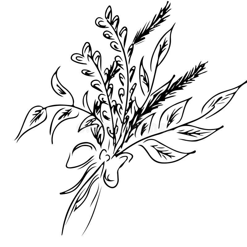 Esboço da alfazema isolado no fundo branco S?rie da aromaterapia Ilustra??o desenhada m?o do vetor Garatuja, linha arte ilustração do vetor