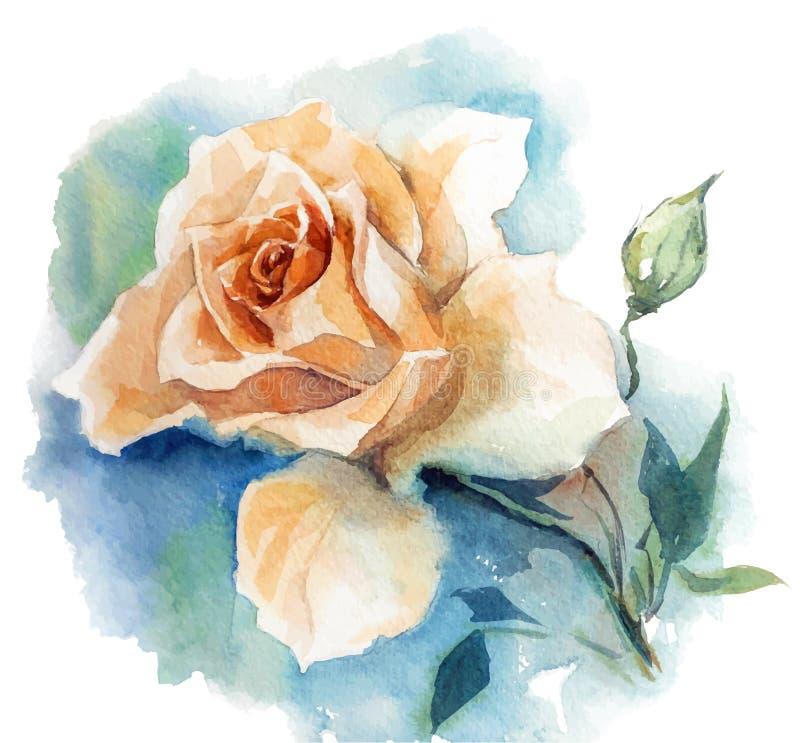 Esboço da aquarela de Rosa ilustração royalty free