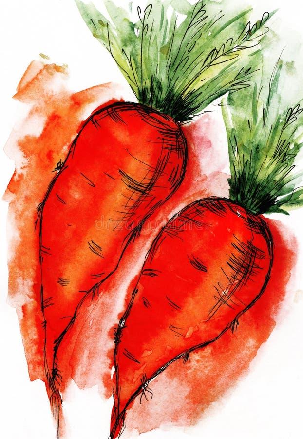 Esboço da aquarela dos vegetais do alimento da cenoura que cozinha o esboço de tiragem ilustração stock