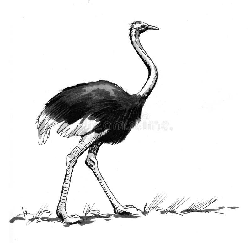 Esboço da avestruz ilustração do vetor