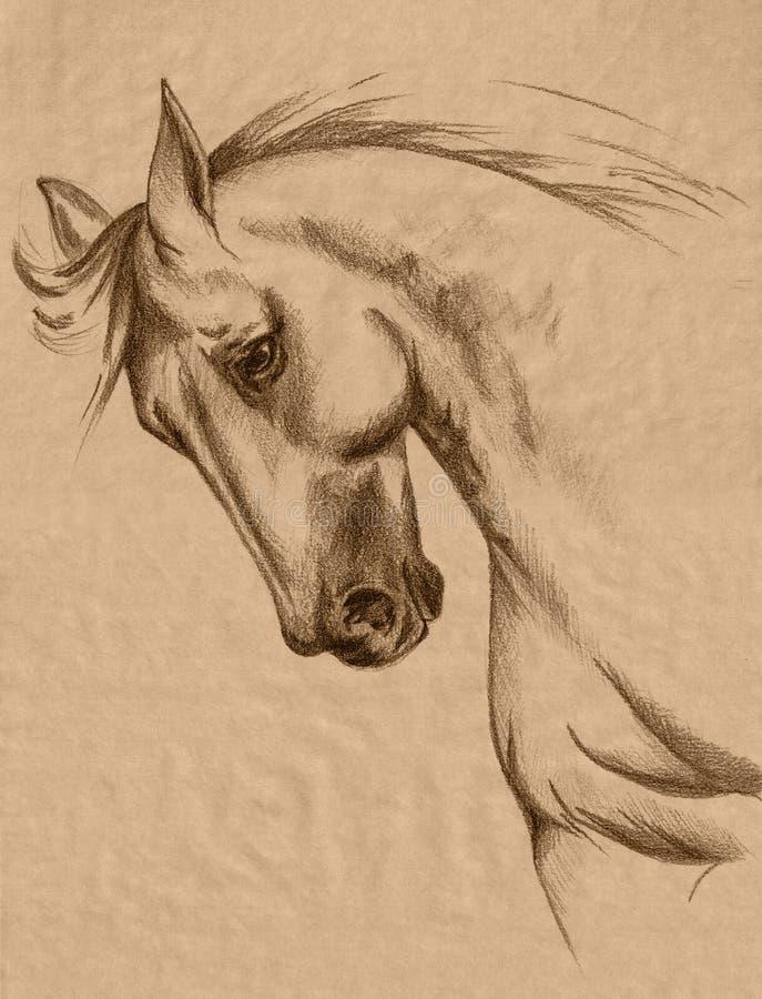 Esboço da cabeça de cavalo ilustração royalty free