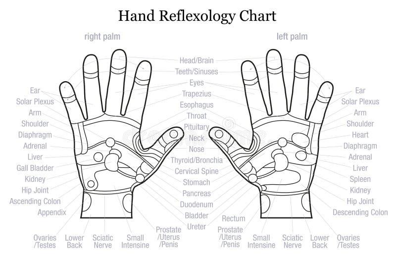Esboço da descrição da carta do reflexology da mão ilustração do vetor