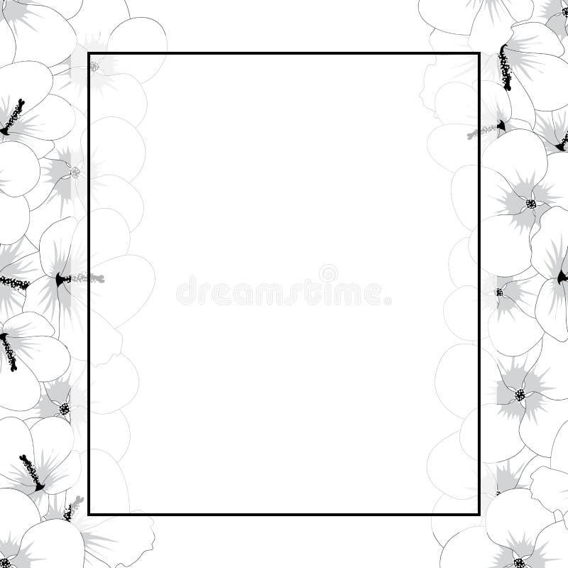 Esboço da flor do syriacus do hibiscus - Rosa de Sharon Banner Border Ilustração do vetor ilustração stock