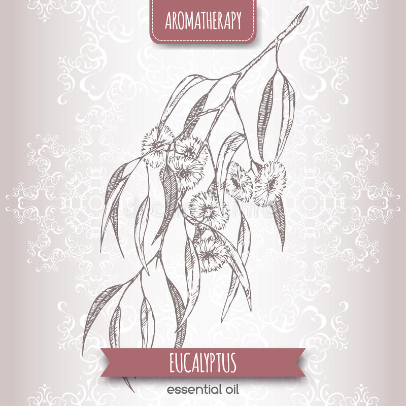 Esboço da goma azul do globulus do eucalipto aka no fundo elegante do laço ilustração royalty free