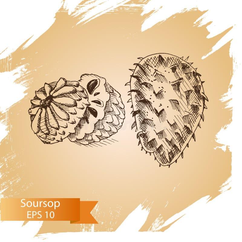 Esboço da ilustração do vetor - fruto do Soursop ilustração do vetor