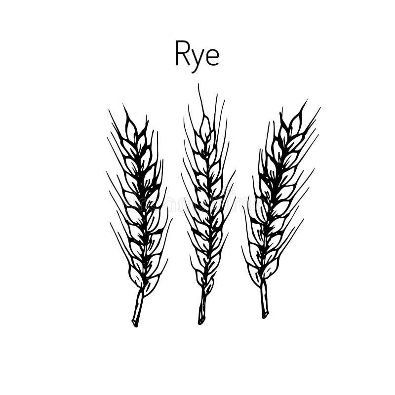 Esboço das orelhas do centeio da tração da mão ilustração royalty free