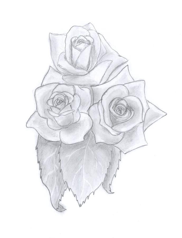 Esboço das rosas ilustração stock