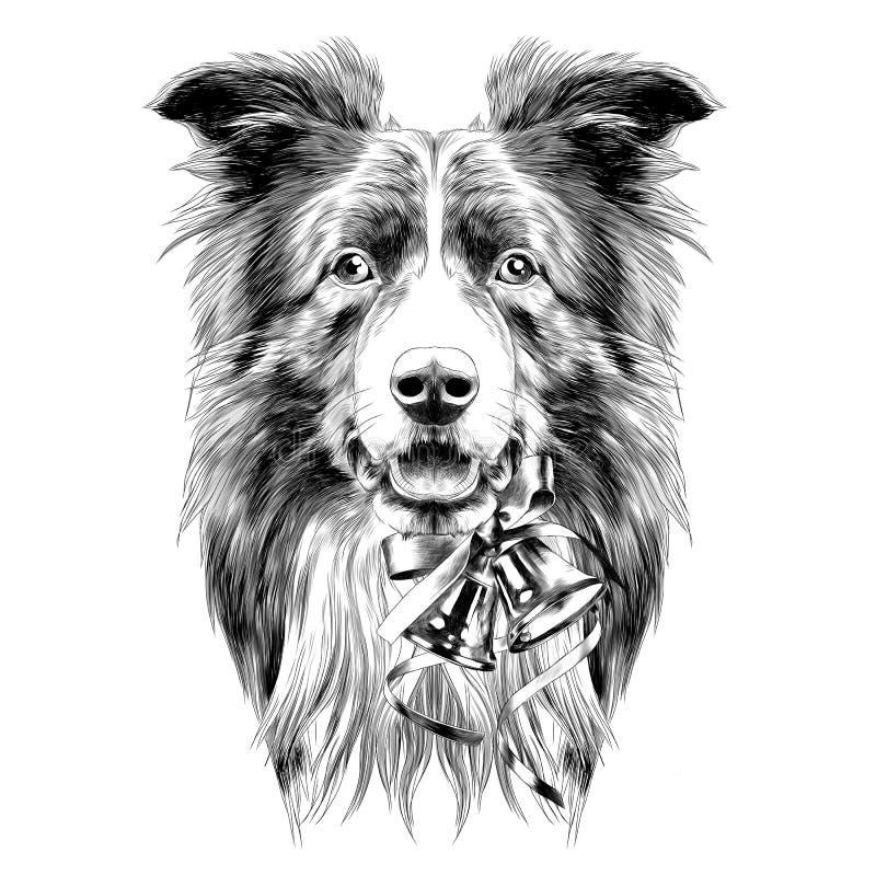 Esboço de border collie da raça da cabeça de cão ilustração stock
