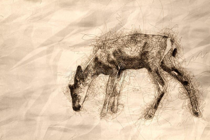 Esboço de Buck Deer Walking Across novo o campo aberto imagem de stock royalty free