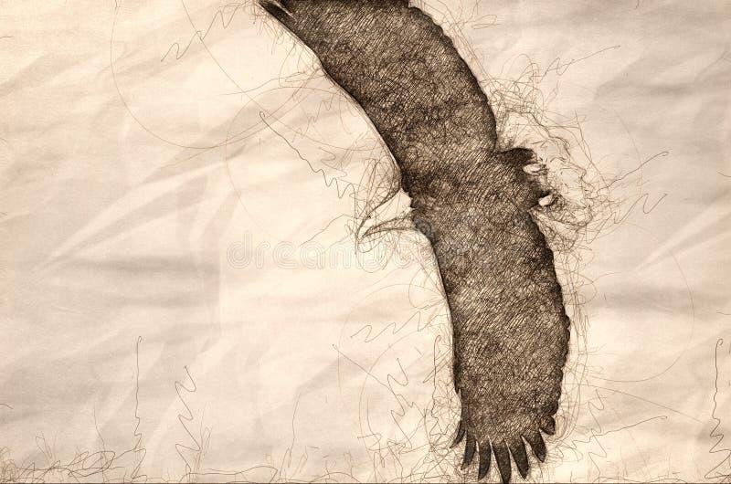 Esboço de Eagle Hunting On The Wing calvo ilustração royalty free