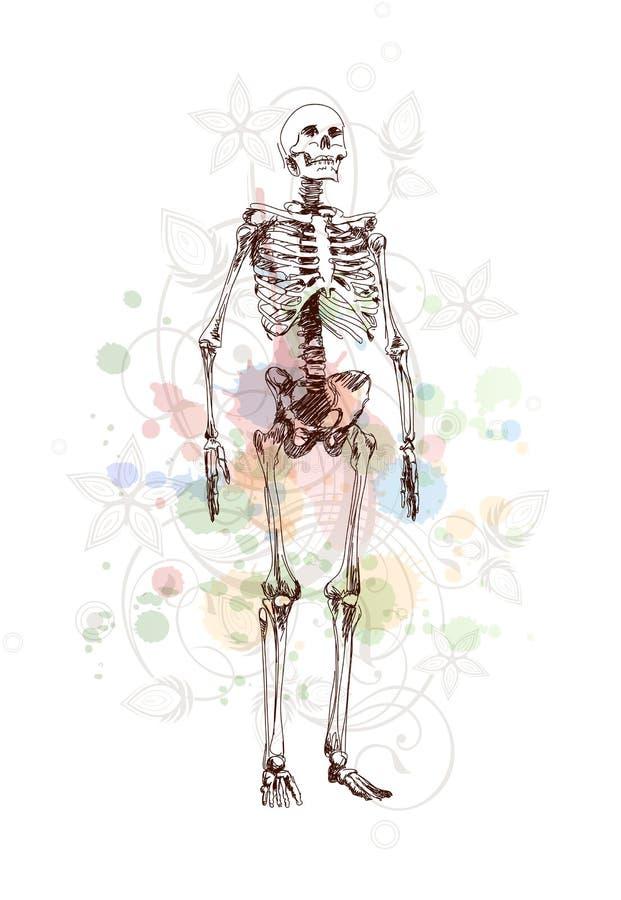 Esboço de esqueleto & ornamento floral da caligrafia ilustração stock
