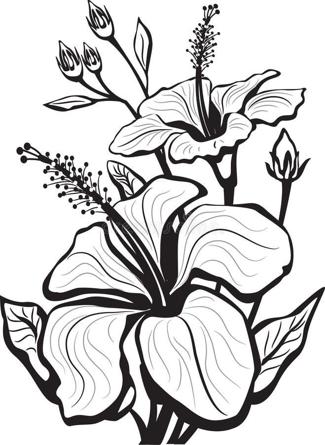 Esboço de flores do hibiscus ilustração do vetor
