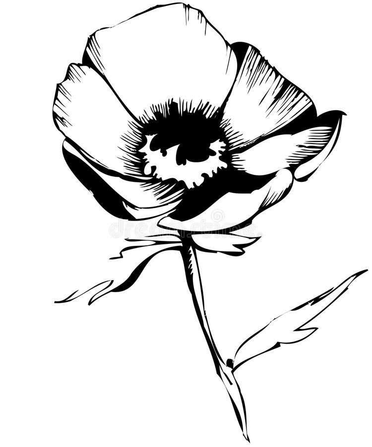Esboço de flores em botão em um fundo branco ilustração royalty free