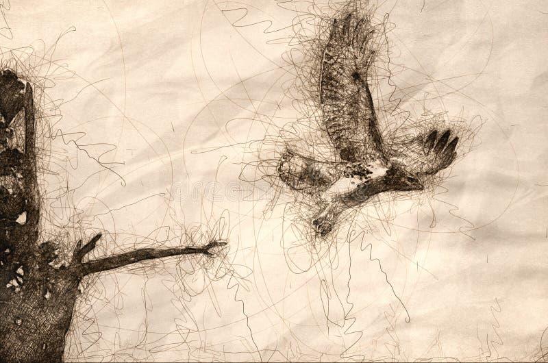 Esboço de Hawk Taking Off Vermelho-atado de Cedar Tree ilustração stock