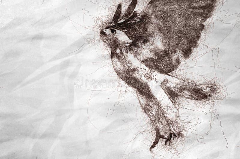 Esboço de Hawk Taking Vermelho-atado a migrar ilustração royalty free
