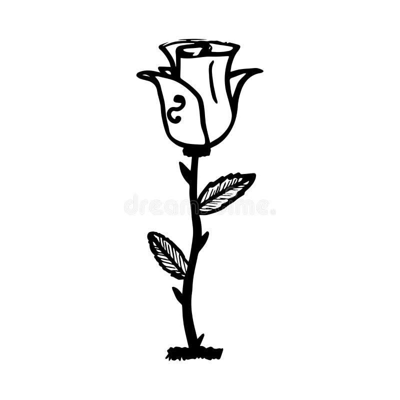 Esboço de Rosa Esboço preto no fundo branco ilustração royalty free