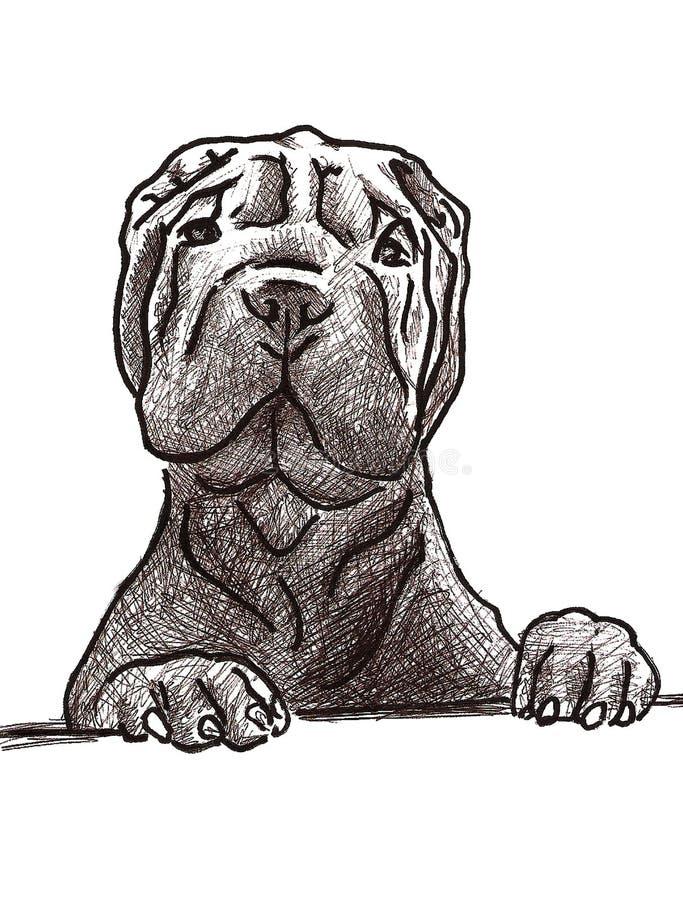 Esboço de Sharpei ilustração do vetor