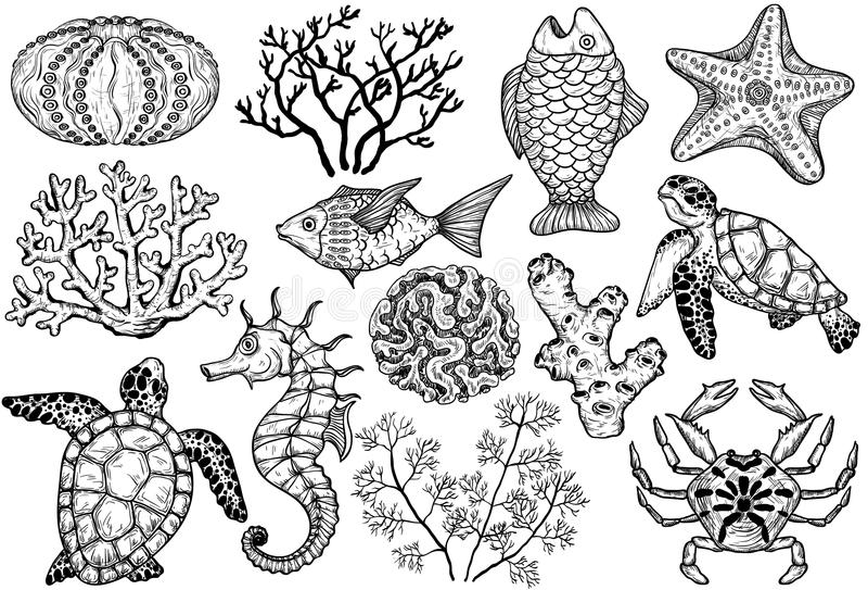Esboço de shell, de peixes, de corais e de tartaruga do mar Ilustração desenhada mão do vetor ilustração stock