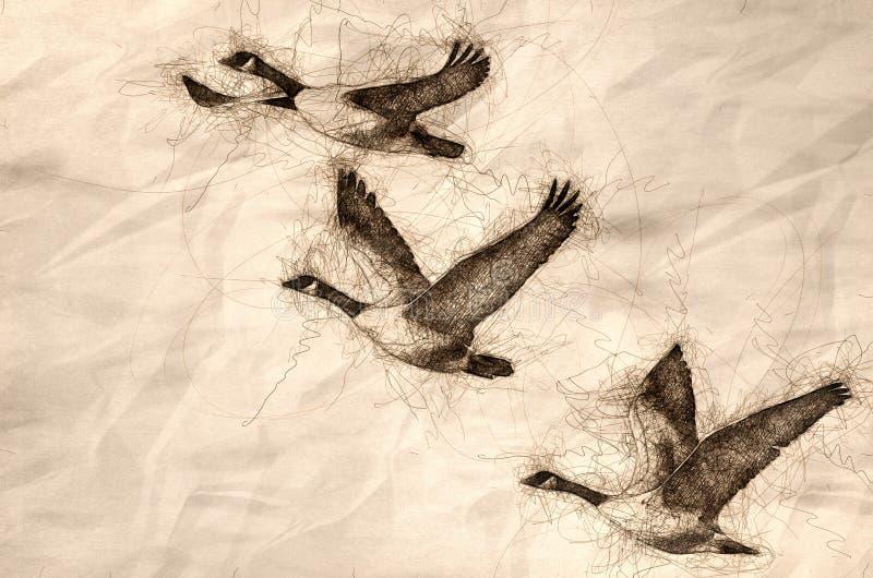Esboço de três gansos de Canadá que voam em um céu azul ilustração do vetor