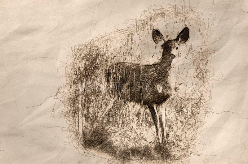 Esboço de um cervo que pisa para fora de Marsh Grass secado alto ilustração stock