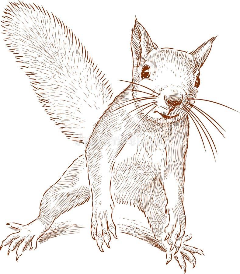Esboço de um esquilo engraçado da floresta