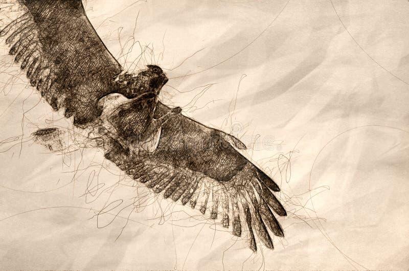 Esboço de um falcão Áspero-equipado com pernas no fundo branco ilustração royalty free