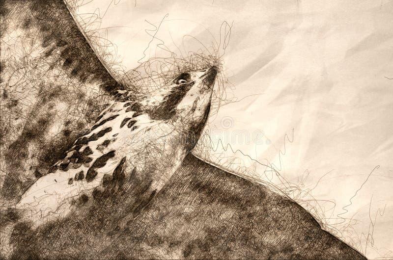 Esboço de um falcão Vermelho-atado em voo ilustração royalty free