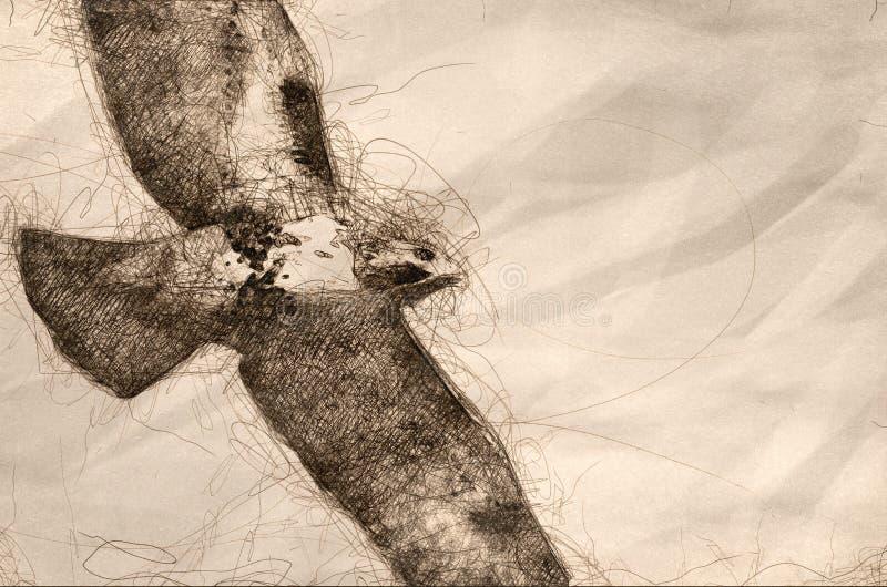 Esboço de um falcão Vermelho-atado imaturo em voo ilustração do vetor