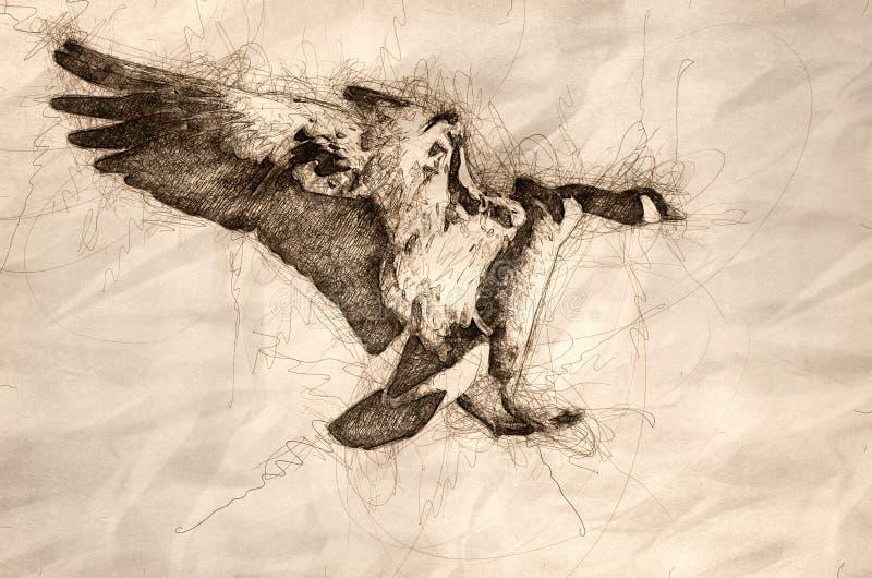 Esboço de um ganso de Canadá que entra para uma aterrissagem no rio frio do inverno ilustração stock