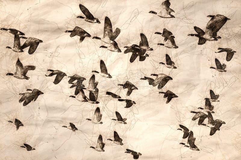 Esboço de um grande rebanho dos gansos que tomam o voo ilustração stock