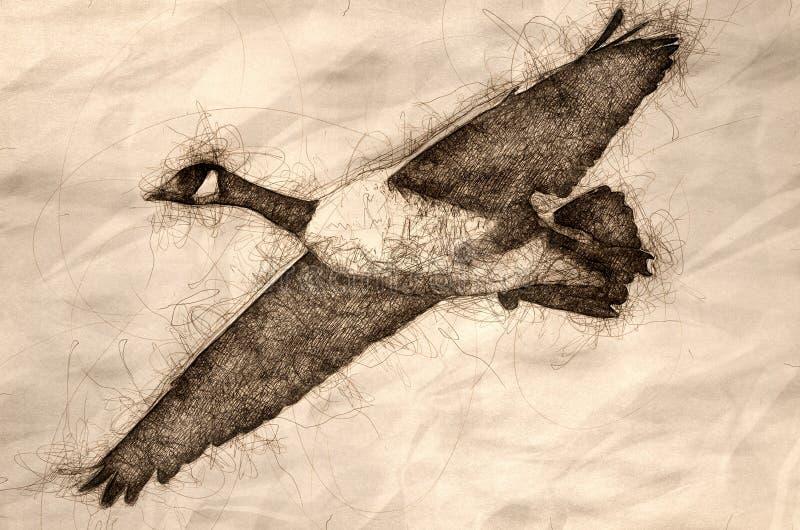 Esboço de um olhar mais atento em um ganso de Canadá em voo ilustração do vetor