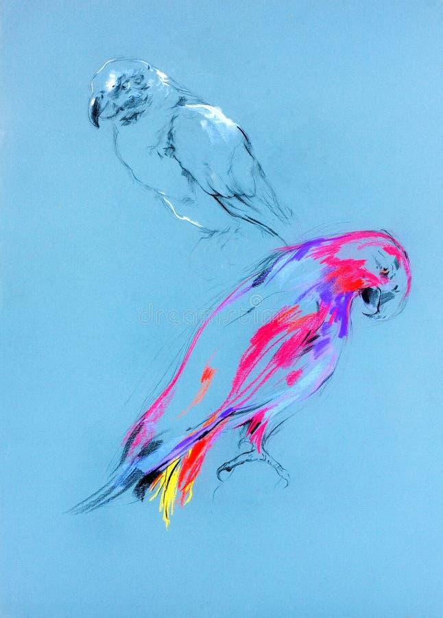 Esboço de um papagaio imagem de stock