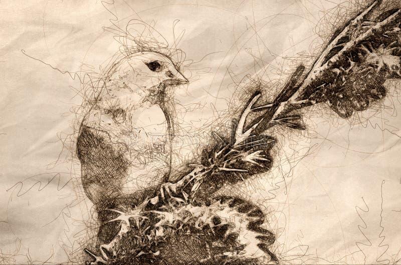 Esboço de um pintassilgo americano empoleirado em uma árvore ilustração stock